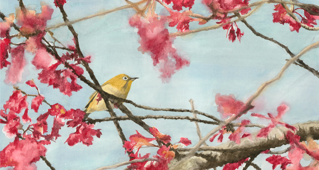 Japanese White-eye - watercolor painting by artist Emily Miller