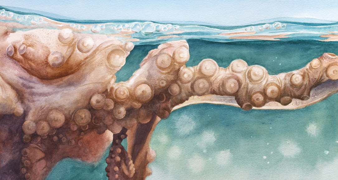 Surfacing - octopus watercolor painting by artist Emily Miller