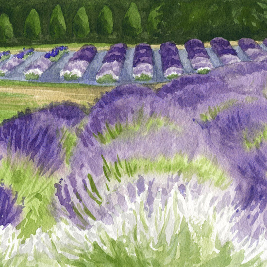 Plein Air in the Lavender Fields